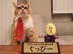 """""""2・22猫の日""""特別企画「BSキャッ東」、猫社長はぐっぴー君に決定"""
