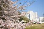 出張動物園やキッズコーナーも登場! ラディソンホテル成田の花見フェスティバル