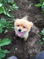 【かわいいイヌ画像】畑仕事をサボる社員を厳重注意するも愛くるしい姿にメロメロ