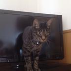 【おもしろネコ画像】貞子感あふれる猫の渾身の呪いがかわいい!