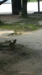 【おもしろネコ画像】かわいい野良猫に遭遇! と思いきや、その正体はなんと…