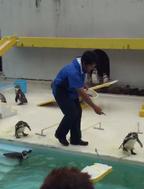 【おもしろアニマル動画】水族館のペンギンショーがグダグダすぎてまるでコント