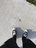 【おどろきアニマル画像】カエルの形にあいたコンクリートの穴がミステリー