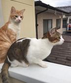 【かわいいネコ画像】漂うサンマのにおいに気づいた猫が見せる恍惚の表情