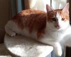 【おもしろネコ画像】鍛え上げた筋肉をドヤ顔で見せつけるイケメン猫