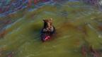【かわいいクマ画像】Googleマップが捉えた鮭を捕食中のクマがシュールすぎる