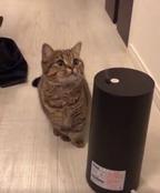 【かわいいネコ動画】加湿器の蒸気と戯れるネコがキュートすぎる