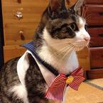 【かわいいネコ画像】梅干しの上でくつろぐ猫の表情が憎めなすぎる