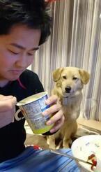 【かわいいイヌ動画】ヨーグルトを食べたい気持ちを絶対に悟られたくないワンコ