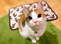 【かわいいネコ動画】ドラクエのミミックを再現した猫が可愛すぎる