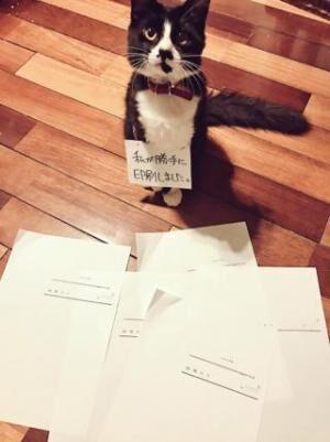 """【かわいいネコ画像】勝手にPCを操作する""""ニャンサムウェア""""の正体がかわいい"""