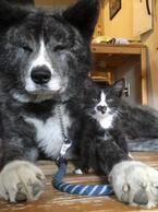 【かわいいイヌネコ画像】突然あらわれた迷い猫が飼い犬と驚くほど息ぴったり