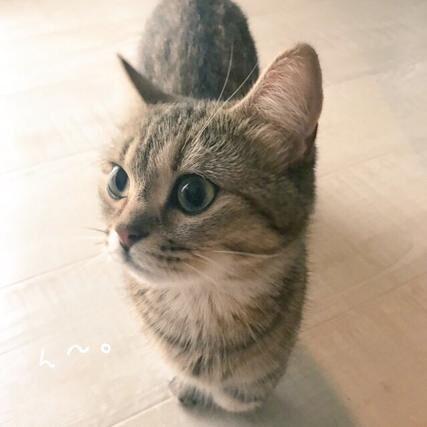【かわいいネコ画像】外出しようとする飼い主を必死に引き留めるニャンコ