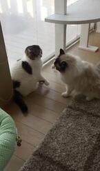 【かわいいネコ画像】猫同士のゆる〜いケンカに心がなごむ