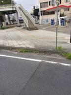 【おどろき植物画像】道端に突如現れたスイカのたくましさに驚愕