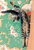 【びっくりネコ画像】猫背とは何か……と問いかけたくなる猫の立ち姿