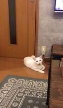 【かわいいネコ画像】勝手に開けないようにドアノブを改造されて怒るニャンコ