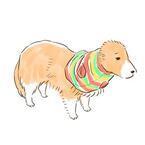 【かわいいイヌ画像】ネットショッピングに失敗して悲しむワンコ
