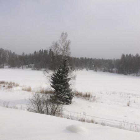 北欧の冬と、春の炎【森と湖とストックホルム vol.1】