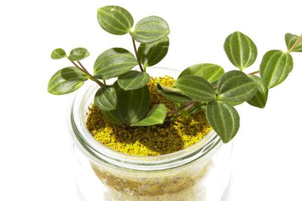 マメじゃなくても簡単に育てられる、観葉植物。『WECK WATERIUM PLANTS』が彩る、夏らしい空間作り