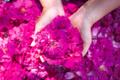 """薔薇の力で美しく。英名で""""Japanese Rose""""と呼ばれるハマナスがベースのオーガニックコスメ「rosa rugosa」がオススメ!"""