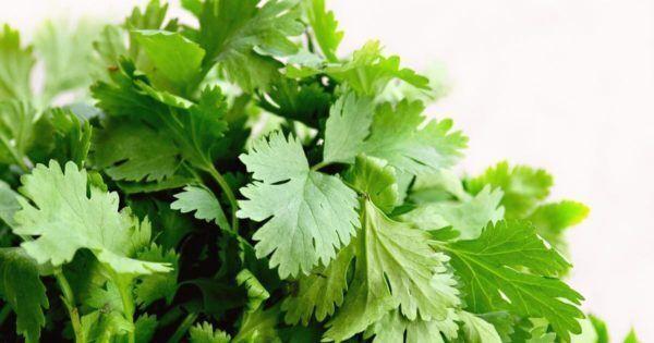 夏にぴったりのアジアごはん!パクチーをもりもり食べるレシピ「パクチー&エビのサラダ」。