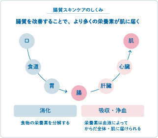 腸質スキンケアプログラムまいこホリスティックスキンケアクリニック