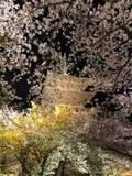 改めて感じる歴史ある京都の魅力 【KAORU from KYOTO vol.37】