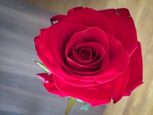 チェコでの花にまつわるエピソード【いろどりのチェコ vol.17】