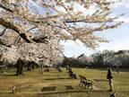 【住みやすい街】自然が豊かで、生活も便利。中央線の穴場「武蔵小金井」は、都会に疲れた人におすすめの街 - Vol.1 【プチDIY女子達のお部屋案内】