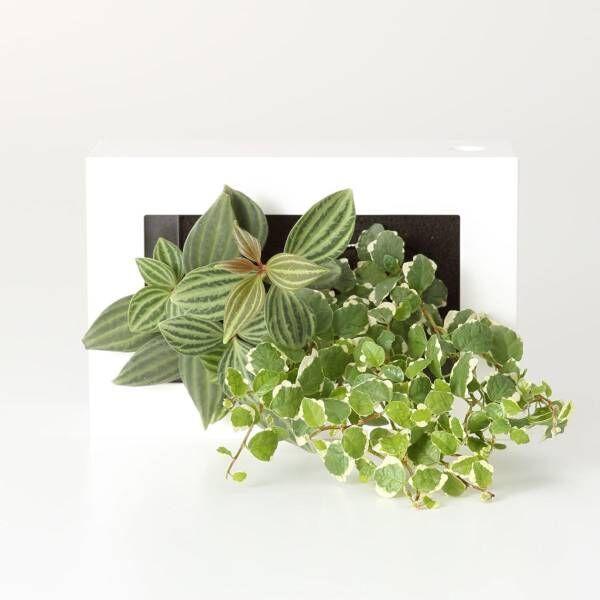 新生活にグリーンを。無印良品で見つけた「癒しのグリーン」5選