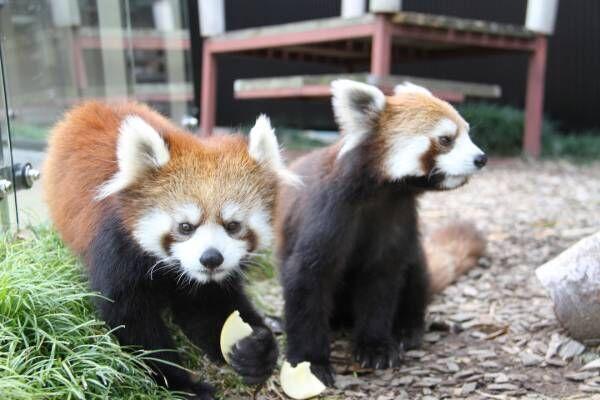 """週末は山と海、可愛いレッサーパンダにも逢える、""""静岡市""""へ小旅行に出かけよう!"""