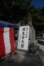 博多三大祭りのひとつ「筥崎宮 放生会(ほうじょうや)」ととびきりのステイ!