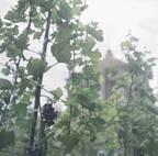 #goodevent / tokyo  11月8日(金)一夜限り 東京の真ん中でワインを味わうイベント「Urban Vineyard 2019 – Kanda-Nishikicho –」開催  -【プチDIY女子達のお部屋案内】