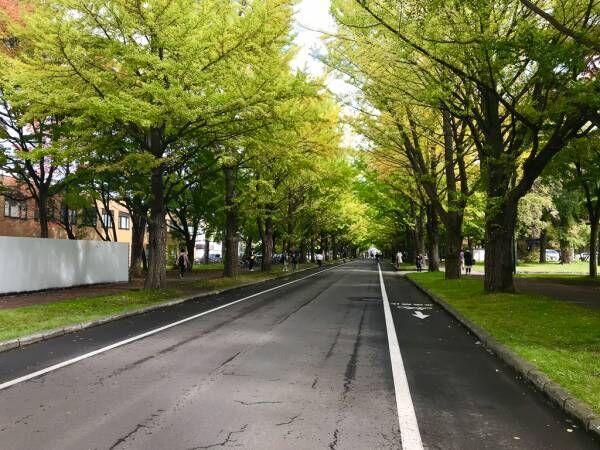 【札幌のおしゃれ賃貸まとめ】学生の活気があふれる「北海道大学」。おすすめ1DK~1LDKのお部屋を集めました 【プチDIY女子達のお部屋案内】