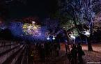夜の大阪城公園で最先端のデジタルアートを体験!