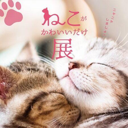 「ねこがかわいいだけ展」横浜、静岡で追加開催決定