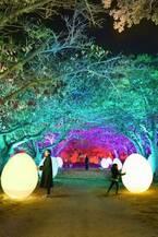 この冬、再び福岡城跡が光のアート空間に