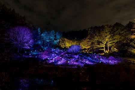 イルミネーションで美しくライトアップされた「六甲高山植物園」の庭園