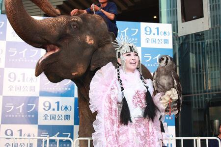 映画『ライフ』イベントで六本木にゾウが登場!