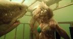 サメが若者を襲いまくる『シャーク・ナイト』今夏公開決定