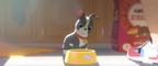 ディズニー新作短編『愛犬とごちそう』映像が公開