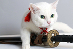 『猫侍2』白猫あなごのトレーナーさんに聞く