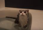 【動画】「お湯が足りニャ~い!!」お風呂大好き猫、肩まで浸かれず不機嫌に……