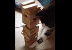 【動画】ジェンガ猫、キュートな肉球で飼い主のターンを阻止!! 気になる勝負の行方は……?