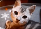 【動画】喉ゴロゴロ……からのコテン!! 大きな瞳で見つめながら甘えてくる小悪魔猫