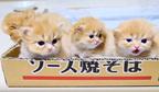 【動画】ふわっふわの毛玉が4つ!? 自由気ままに遊ぶマンチカンの子猫たち