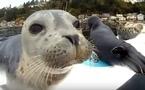 【動画】「よいしょ、よいしょ…つるり~ん」サーフボードに乗ろうと大奮闘のアザラシの赤ちゃん