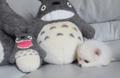 【動画】新種のトトロ発見!? ふわふわの可愛すぎる子犬