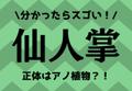 分かったらスゴい!【仙人掌】正体はアノ植物?!
